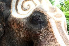 Close-up Thai elephant. The eyes of the elephant with tears. royalty free stock photos