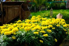 Close up Thai garden style with yellow flower. Thai garden style with yellow flower look relaxed royalty free stock photo