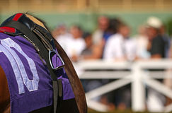 Close Up Thoroughbred Racehorse With Tack. Close up view of Thoroughbred racehorse with saddle, stirrup, towel, and reins. Copy space to right of horse Stock Photos