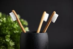 Close up of three bamboo toothbrushes in a black glass with plant. On a dark background royalty free stock images