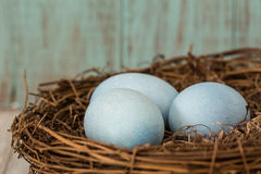Close Up of Three Blue Easter Eggs In A Nest. Close up macro of three blue Easter eggs in a nest Royalty Free Stock Images