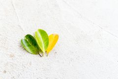 Close up Three color leaves. royalty free stock photo