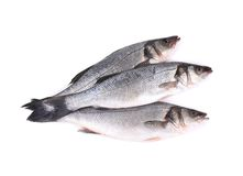 Close up of three fresh seabass fish. Stock Images
