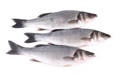 Close up of three fresh seabass fish. Royalty Free Stock Photos