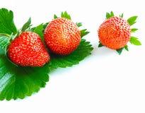 Close-up of three fresh vibrant strawberries Stock Photo