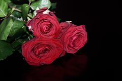 Close-up of three red roses on black background. Close-up of three dark red roses on black background with copy space stock photo