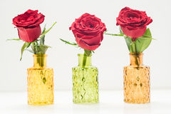 Close up of three red roses in glass vases Royalty Free Stock Photos