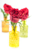 Close up of three red roses in glass vases Stock Images