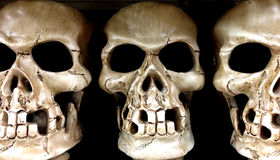Close-up of Three Skulls Royalty Free Stock Photography