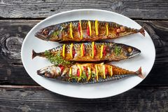 Close-up of three whole broiled hot mackerel. Close-up of three whole grilled mackerel with lemon slices and fresh thyme on a white oval platter on an old wooden royalty free stock photo