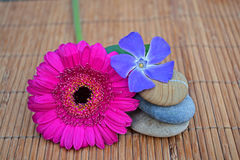 Close up of Three zen stones with pink and purple  flowers on bamboo reed Royalty Free Stock Image