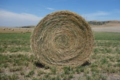 Close-up of a tidy  roll of hay Royalty Free Stock Photos