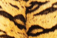 Close up of tiger black stripes on fur Stock Image