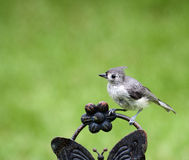 Close up of Titmouse Stock Images