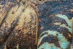 Close up to Colorful and patterns of dinosaur model surfaces stock photo