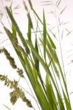 Close up to grass Stock Photos