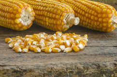 Close up to the pile of grain corn on a wooden background . Royalty Free Stock Photos