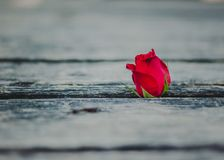 Rose on the old planks. Royalty Free Stock Photography