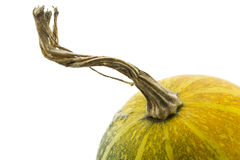 Close up to a small pumpkin Royalty Free Stock Images