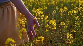 Close up tocante das flores da mão da mulher Tiro da zorra vídeos de arquivo