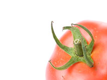 Close up of a tomato Stock Image