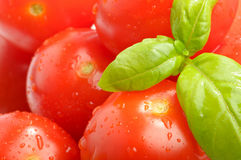 Close Up Tomatoes Royalty Free Stock Images