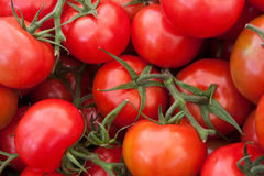 Close up of tomatoes Stock Images