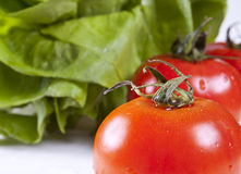 Close up of tomatoes. And lettuce on the white background Royalty Free Stock Images