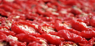 Close up on tomatoes drying Stock Image