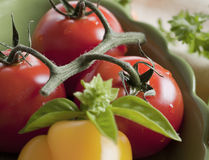 Close-up of tomatoes on the vine Stock Images