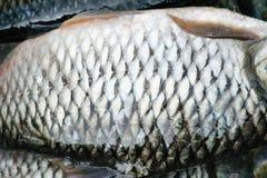 Too view fresh raw siamese mud carp or white fish skin , nature fresh water patterns texture stock image