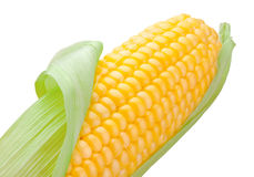 Close-up top corn cob isolated on white background. Close-up top corn cob isolated on a white background Royalty Free Stock Image