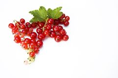 Close up, top shot of fresh harvested redcurrant on white background, selective focus, space for text, isolated stock photography