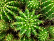Close up top view cactus stock photography