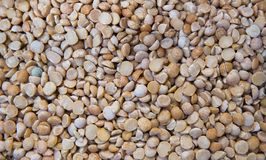 Close up top view on a dry raw chickpeas in a box. Macro. Healthy dietary food rich in microelements cellulose. Food for royalty free stock photography