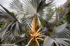 Close up  top view of a palm tree Stock Photos