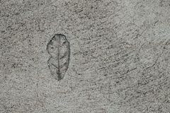 Close up top view single leaf stamped on concrete for decorate walkways. stock photography