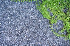 Top view small pebble or gravel stone texture with green ivy leaves patterns on floor and space for text,nature background. Close up Top view small pebble or stock photos