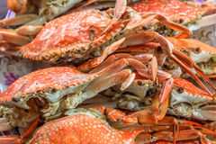 Close up top view steamed crabs in the restaurant for lunch and dinner Stock Photos