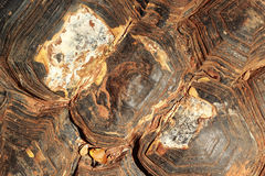 Close-up of tortoise shell Royalty Free Stock Photo