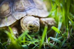 Close up of a tortoise Stock Image