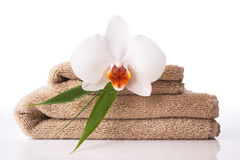 Close up of towel and orchid. On reflective white surface royalty free stock image