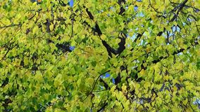 Close up of a tree in autumn with bright colors stock photography