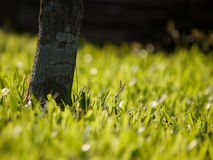 Close-up tree on a background of green grass lawn. Royalty Free Stock Photos
