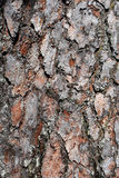 Close up of Tree Bark. Close up shot of bark on A Scots Pine Tree Stock Images