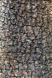 Close up tree bark Royalty Free Stock Images