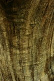 Close up of tree bark. Close up of rough tree bark Royalty Free Stock Images