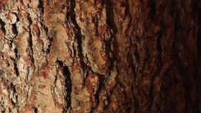 Close up of tree bark stock video footage