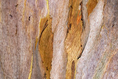 Close up tree bark background, forest tree,. Forest tree,Close up tree bark Stock Photo