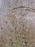 Close-up of tree bark with circular bump Stock Photos